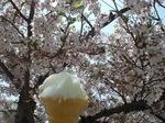 チリンチリンアイス.JPG