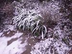 愛宕の雪景色2.jpg
