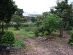 本家の庭.JPG
